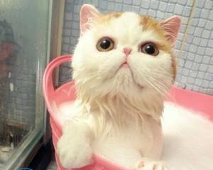 Как помыть кошку, чтобы не причинить ей вреда?