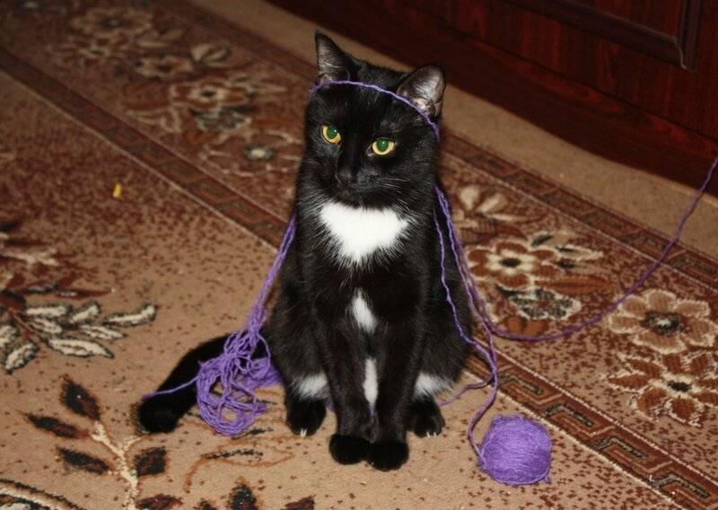 Черная кошка в доме – хорошо или плохо