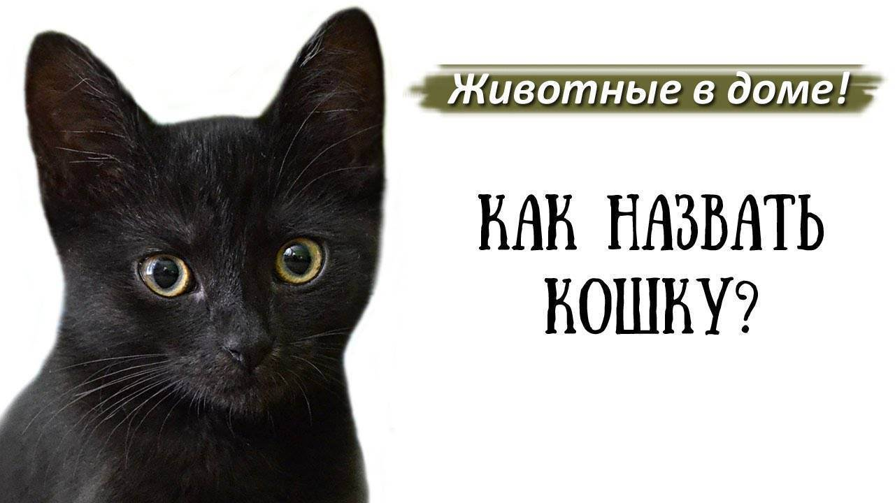 У вас черный котенок? назовите его оригинальной кличкой