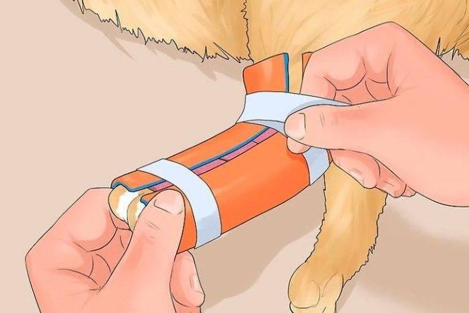 Перелом лапы у кошки: основные виды, их диагностика и первая помощь питомцу
