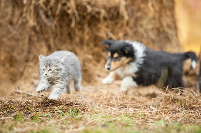 Почему собаки не любят кошек? причины, фото и видео  - «как и почему»
