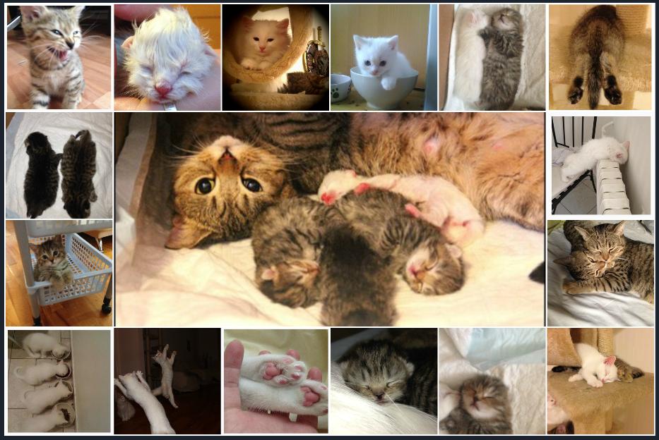Помогу сделать документы на кошку. породистая кошка без документов: что делать, и куда бежать