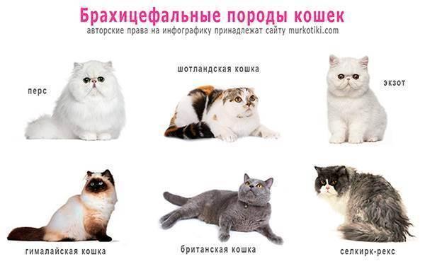 Кот храпит
