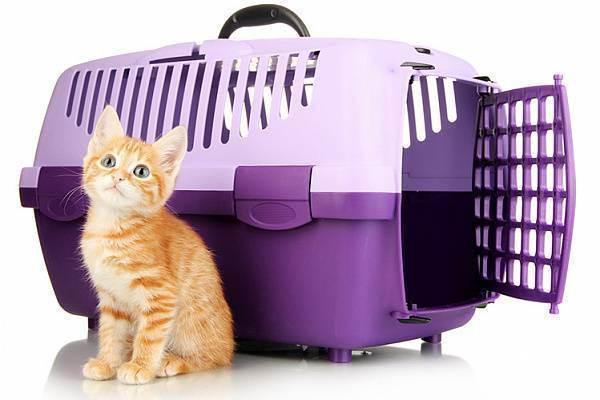 Переноска для кошек, фото, выбрать переноску для кошки, переноска контейнер, сумка переноска, корзина переноска, переноска рюкзак