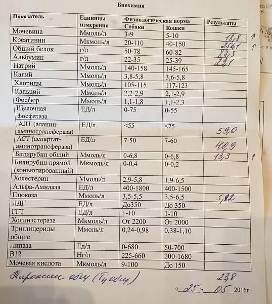 Биохимический анализ крови (11 показателей) для кошек и котов