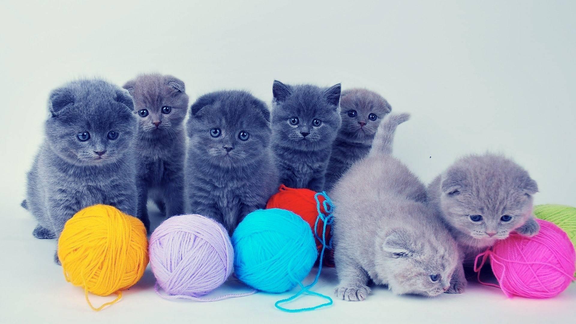Как у кошек происходит спаривание, на какой день течки лучше вязать самку, сколько длится сам половой акт?