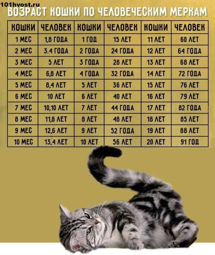 До какого возраста растут домашние коты и кошки?