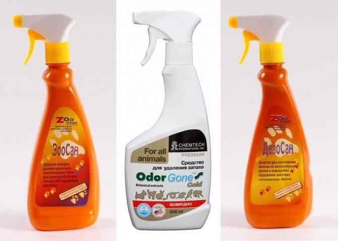 Запах кошачьего туалета: чем убрать этот аромат из квартиры?