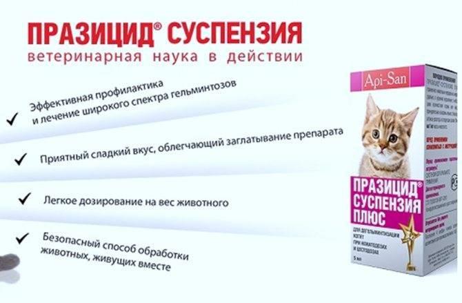 Празицид для кошек – назначение, инструкция, отзывы