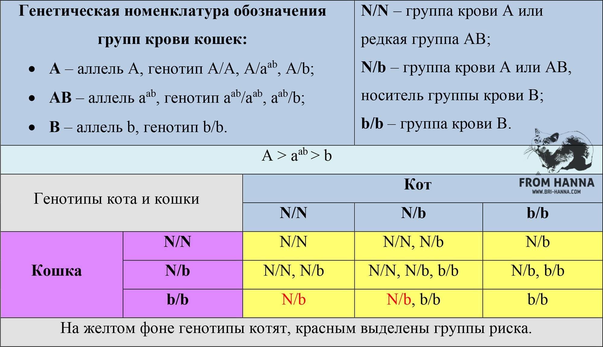 Сколько групп крови у кошек - kotiko.ru