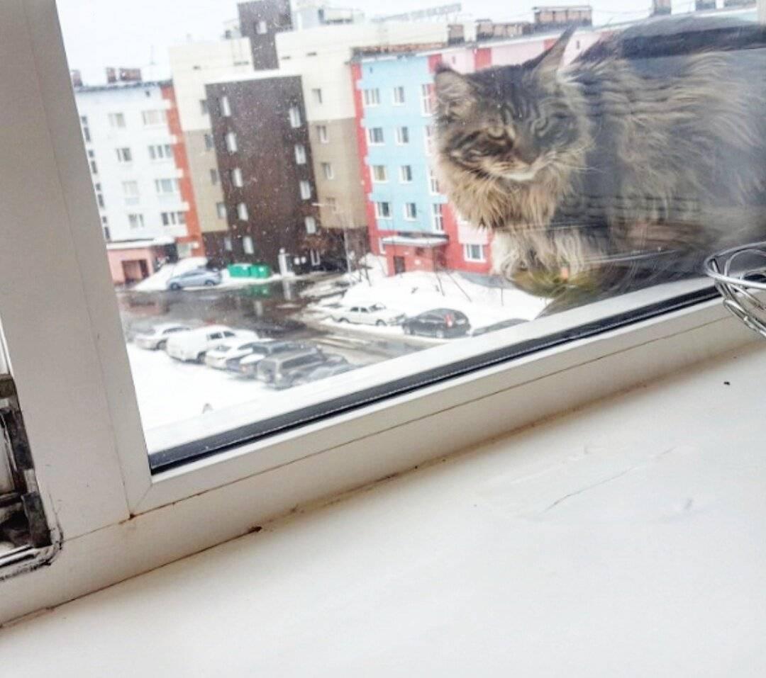 Если котенок сильно ушиб лапку что делать