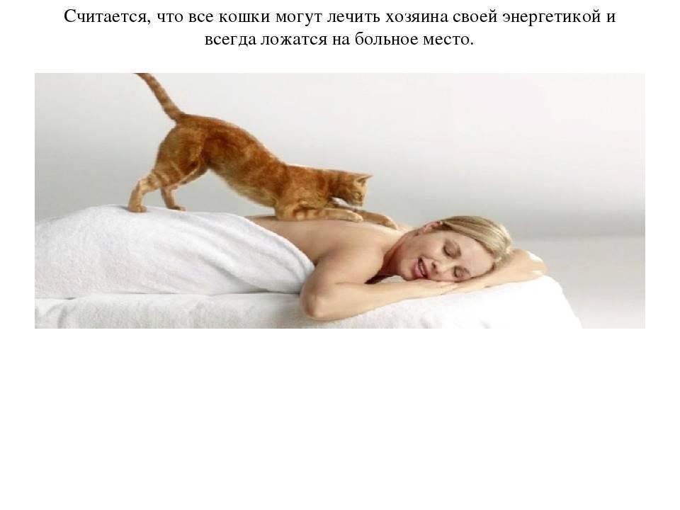 Стоит ли пускать кота в свою постель, если вы верите в приметы