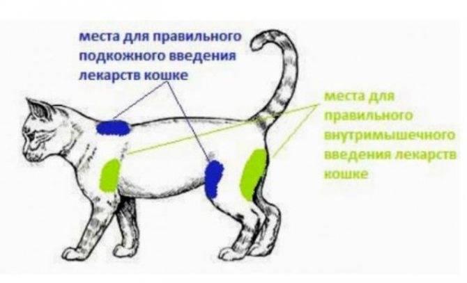 Глобфел для кошек