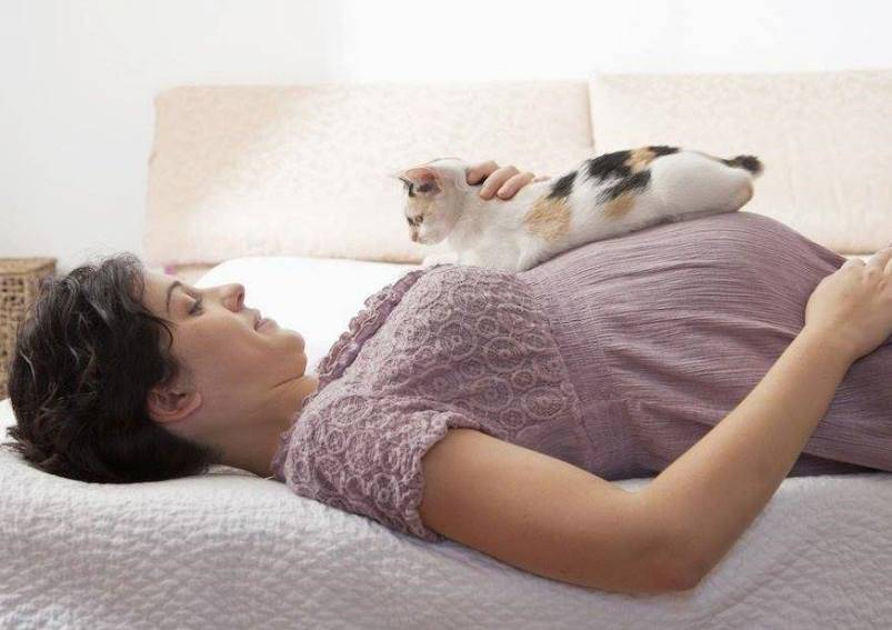Почему кошка ложится на грудную клетку, что это значит?