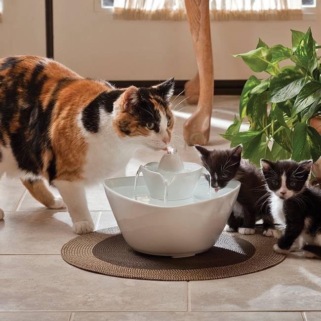Кошка не пьет воду, что делать? | дети фауны