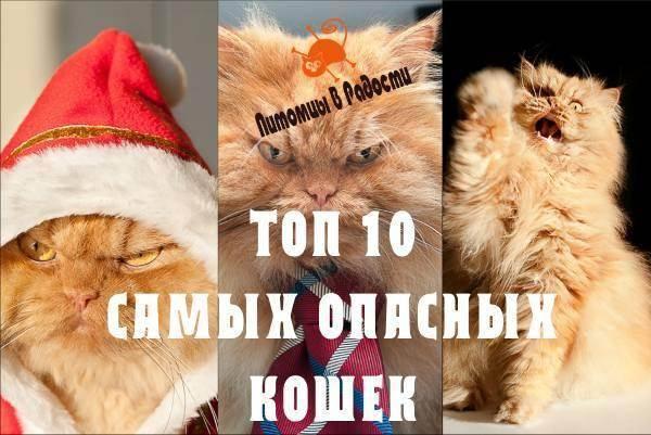Самые опасные и вредные кошки в мире: топ-10