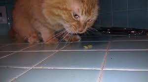 Почему коты любят оливки и маслины, их польза и вред