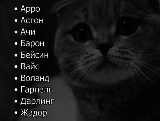 Выбор клички для черного котенка: в зависимости от цвета, пола и других условий