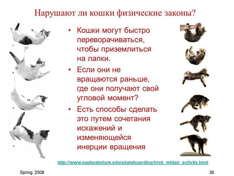 Чем опасные кошки для человека – 6 заболеваний