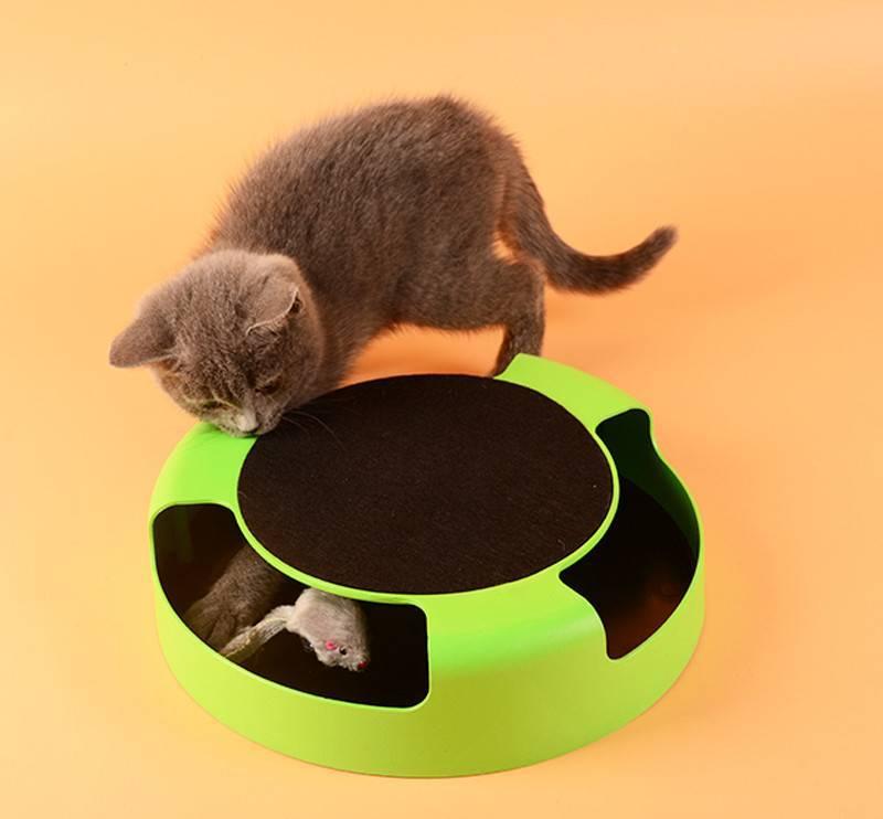 Игрушки для кошек: как не свести своего питомца с ума - лайфхакер