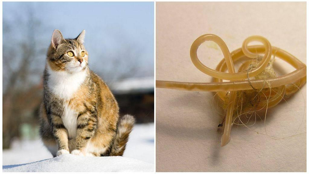 Что делать если у беременной кошки глисты - oozoo.ru