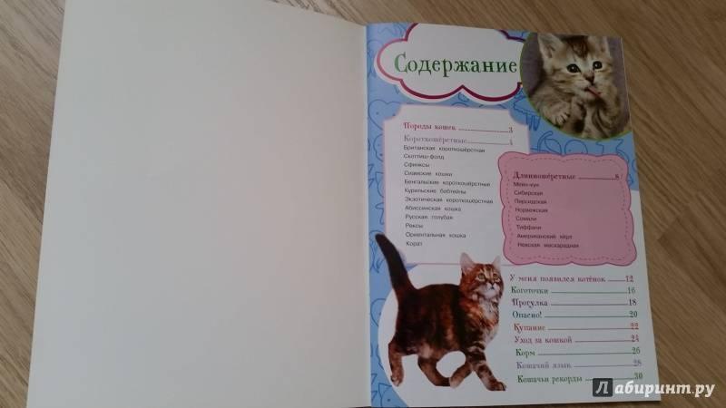Как правильно воспитать котенка?