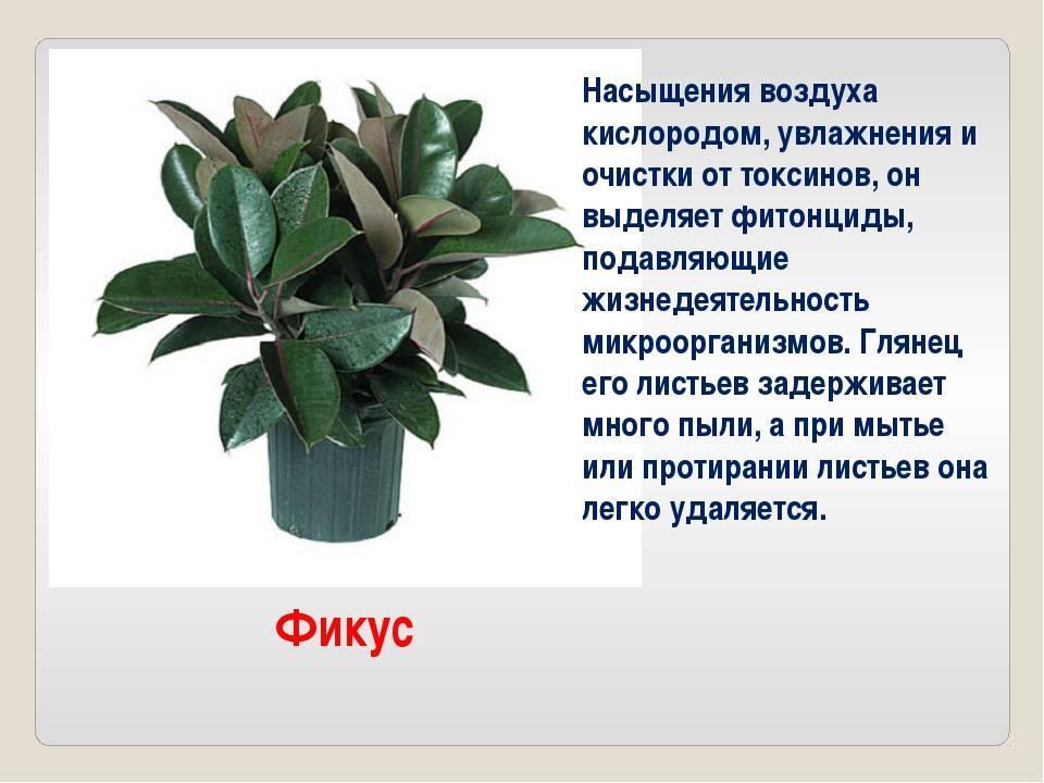Растения опасные для домашних животных. список ядовитых растений — ботаничка.ru