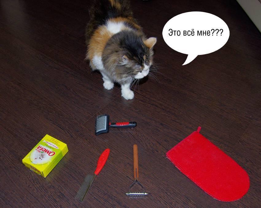 У кошки или кота сильно лезет шерсть, выпадает клоками: почему, что делать, как вылечить взрослое животное или котенка в домашних условиях
