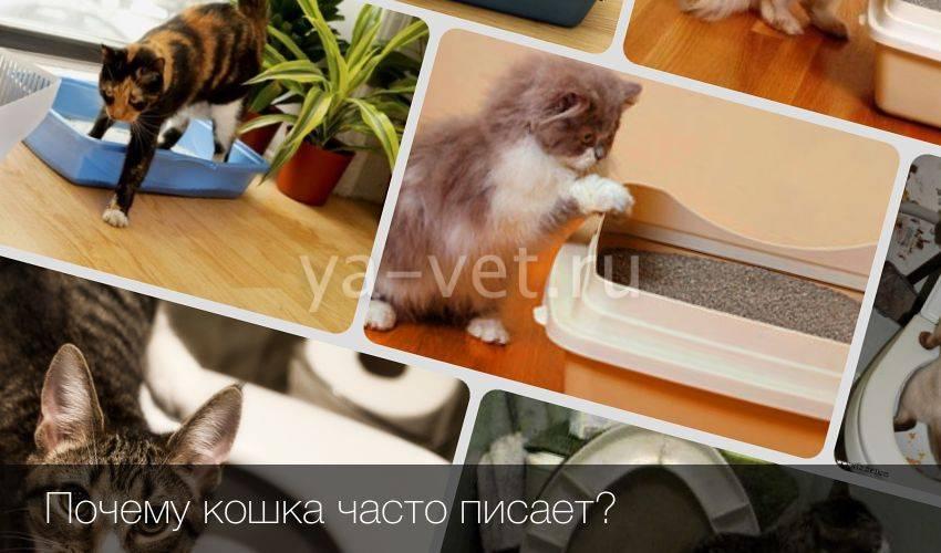 Кот часто ходит в туалет по-маленькому по чуть-чуть кот часто ходит в туалет по-маленькому по чуть-чуть