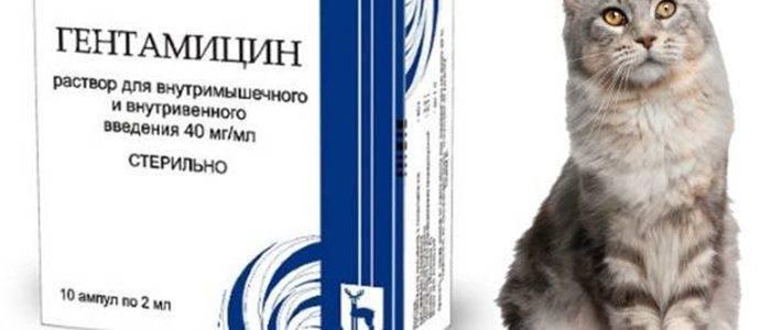 Антибиотики для кошек широкого спектра действия – типы препаратов и дозировка