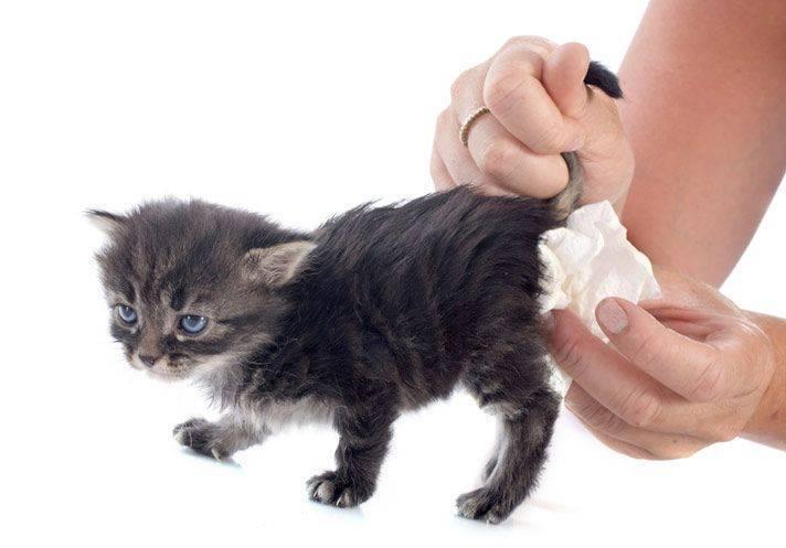 У кормящей кошки понос — что делать?