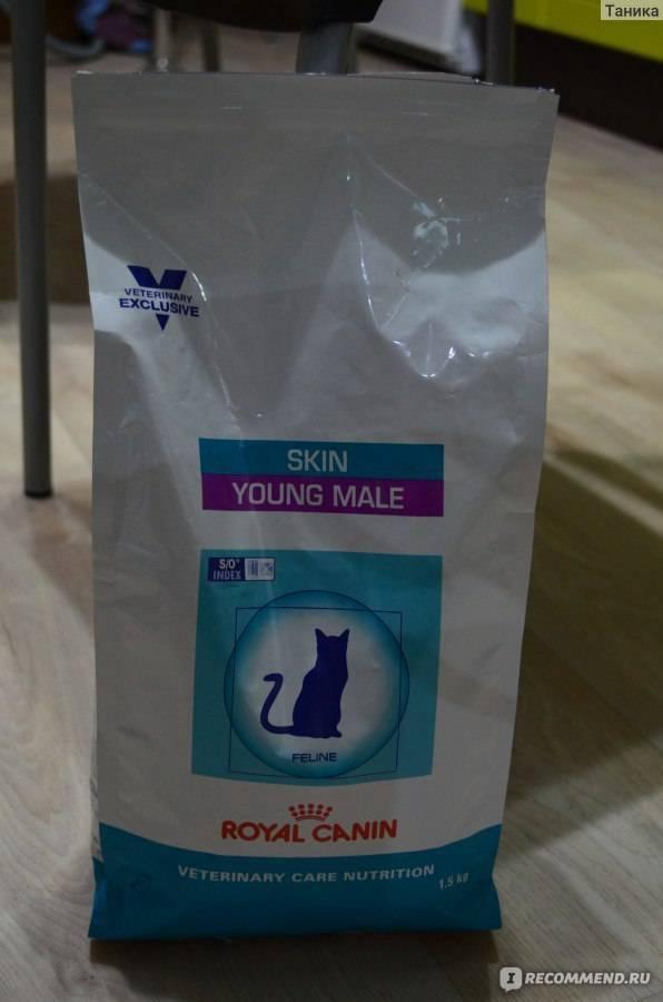 Чем нужно кормить взрослого сфинкса и котенка