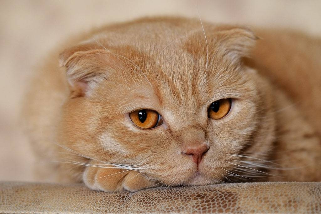 Кошка икает почему