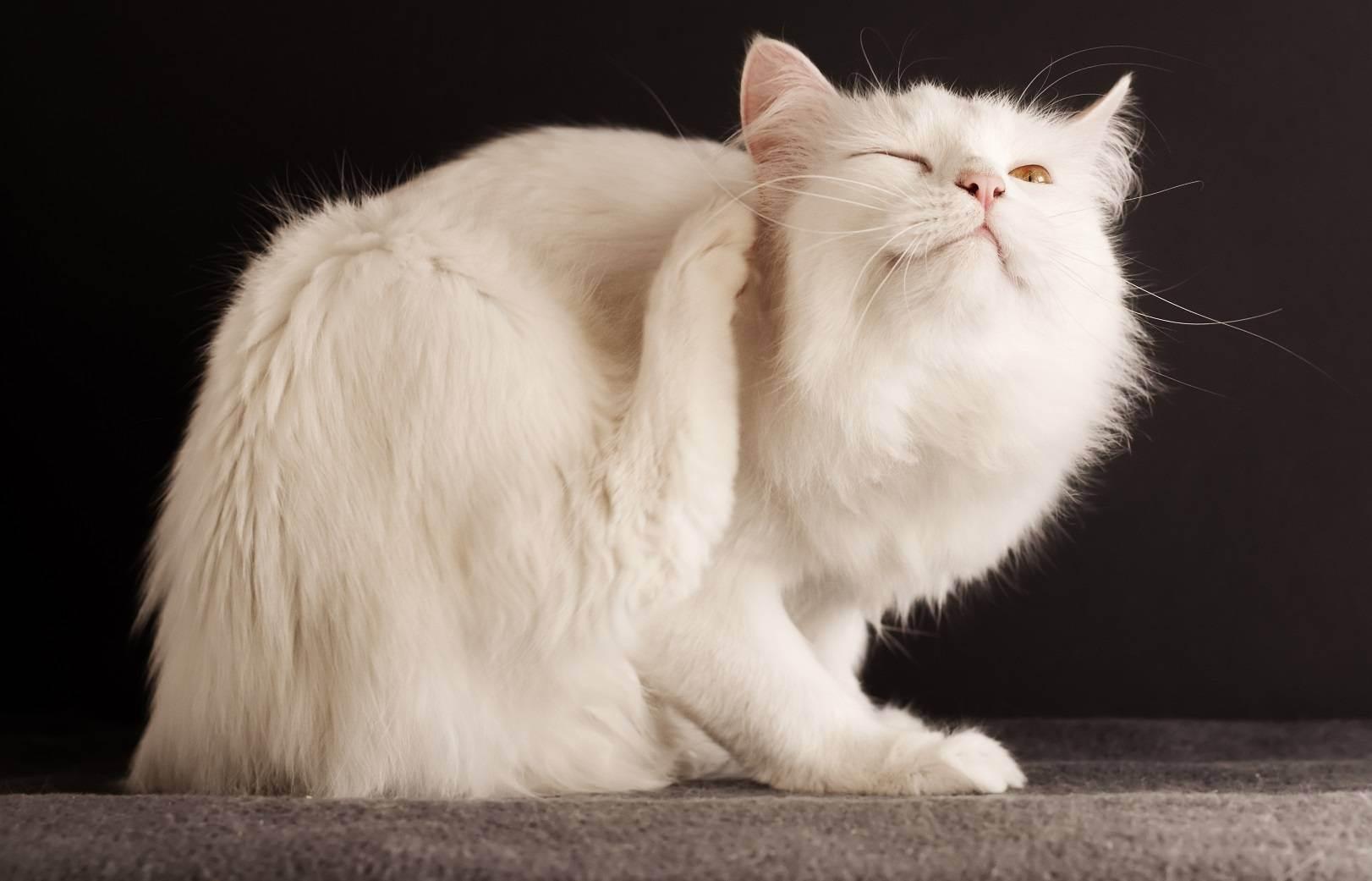 Лучшие советы для владельцев кошек: как сохранить порядок в доме