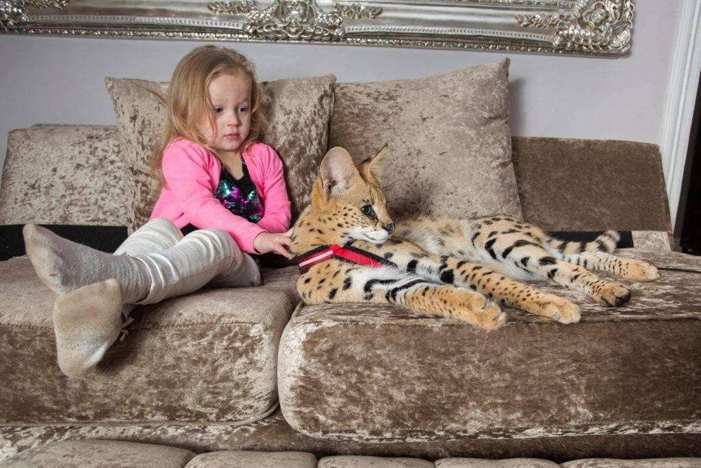 Топ 10 маленьких домашних животных для вашего ребенка