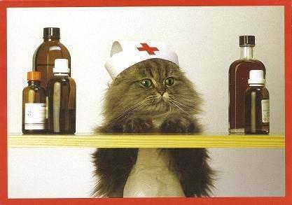 Отравление у кошки: первая помощь