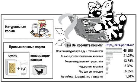 Как и чем накормить больного кота или кошку - oozoo.ru