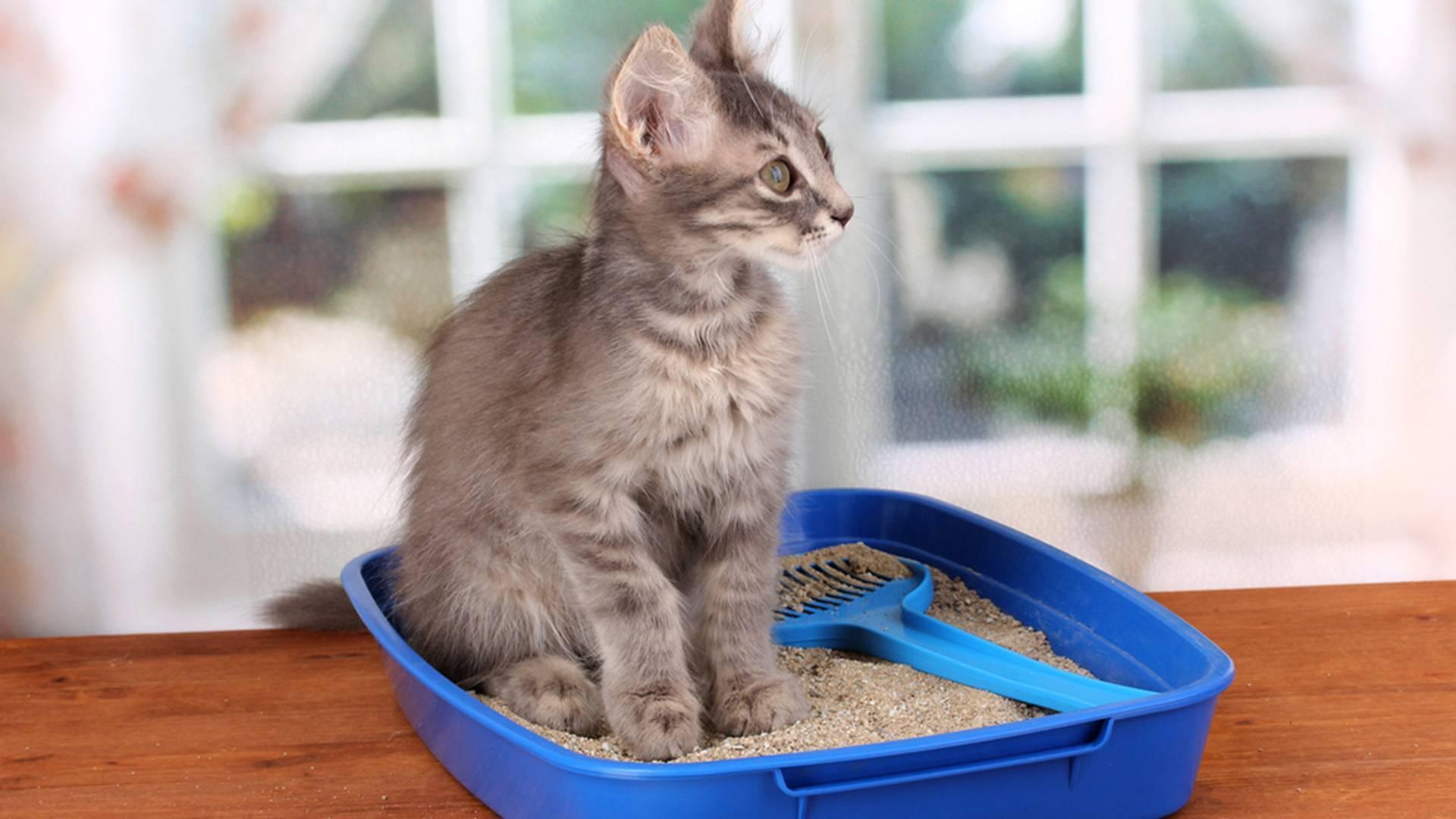 Как приучить котенка к когтеточке: ряд полезных советов как приучить котенка к когтеточке: ряд полезных советов
