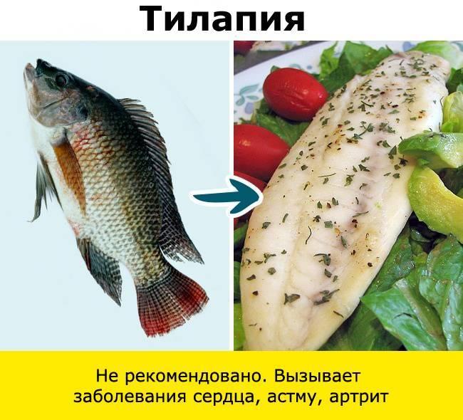 Можно ли кормить кошек рыбой? можно ли давать коту рыбку каждый день? какую рыбу можно давать: сырую или вареную, речную или морскую?
