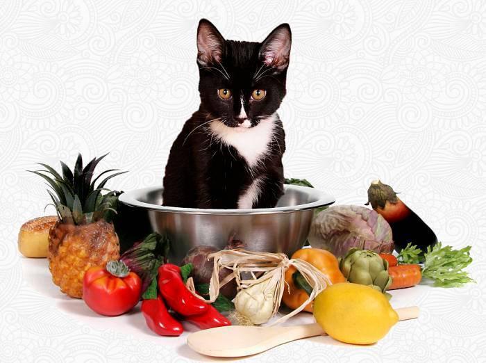 Чем лучше кормить породистую кошку?