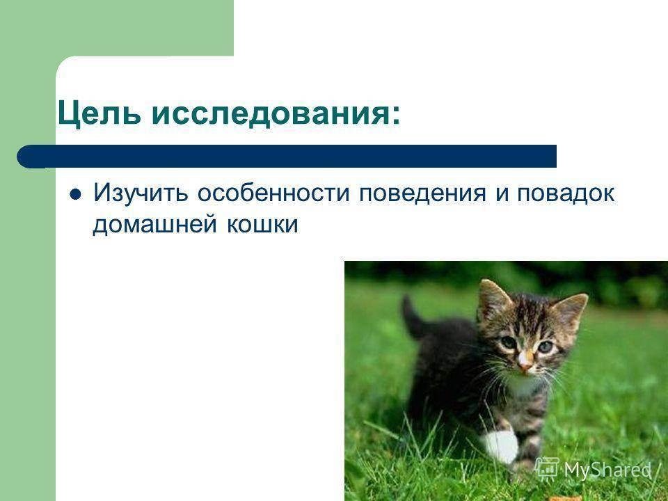 Особенности характера и поведения кошек