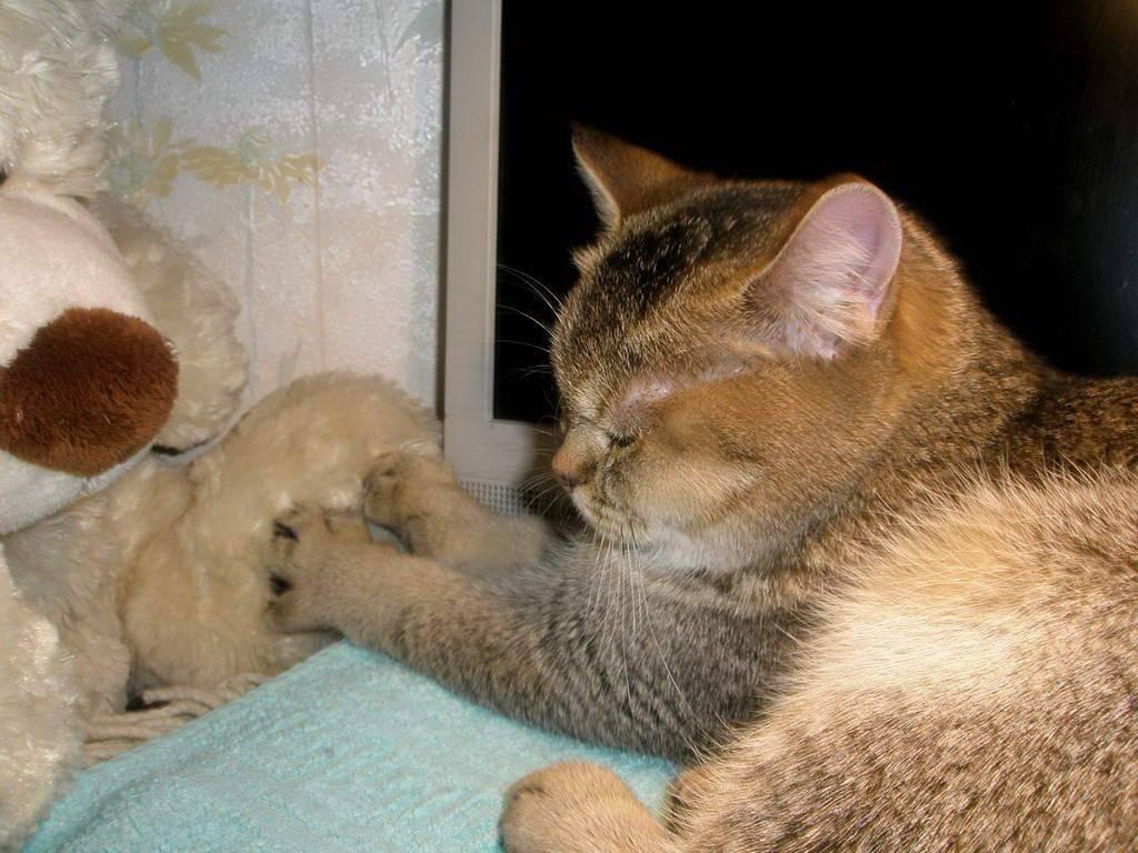 Зачем кошки мнут лапами постель и человека