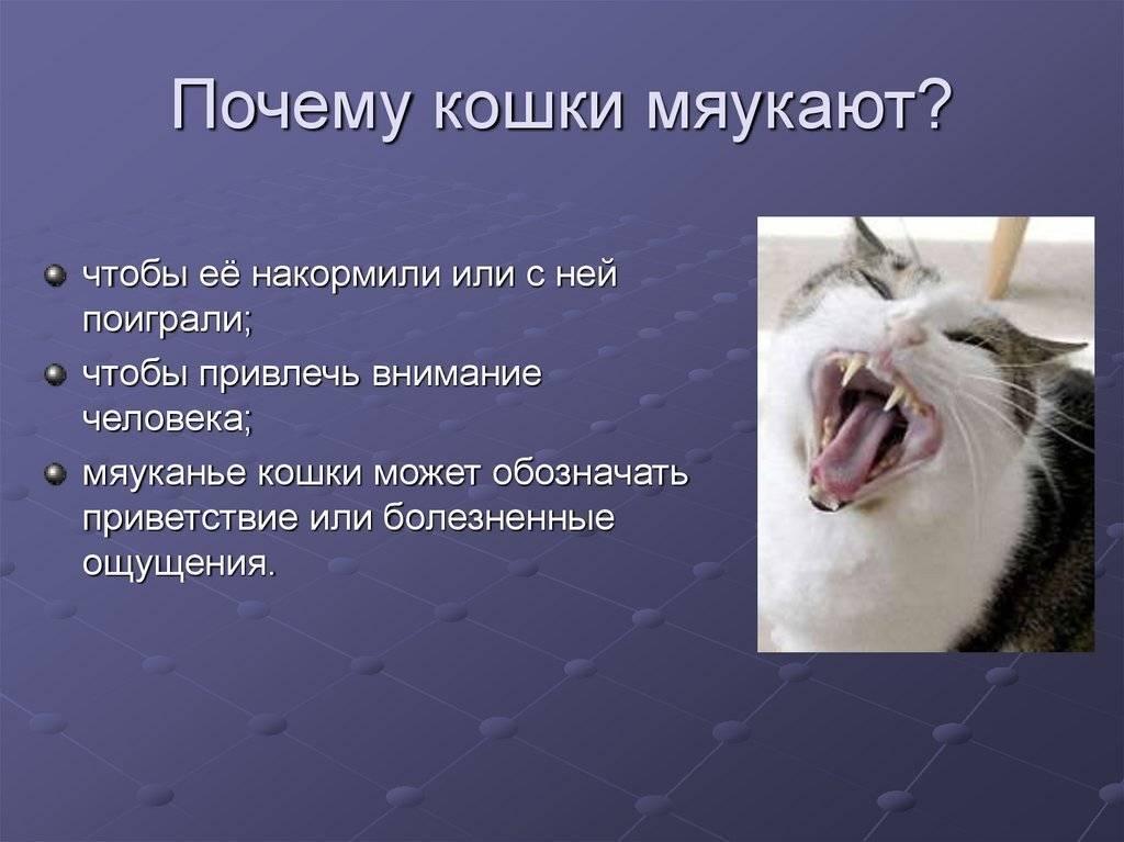 К чему кошки уходят из дома — что говорят приметы