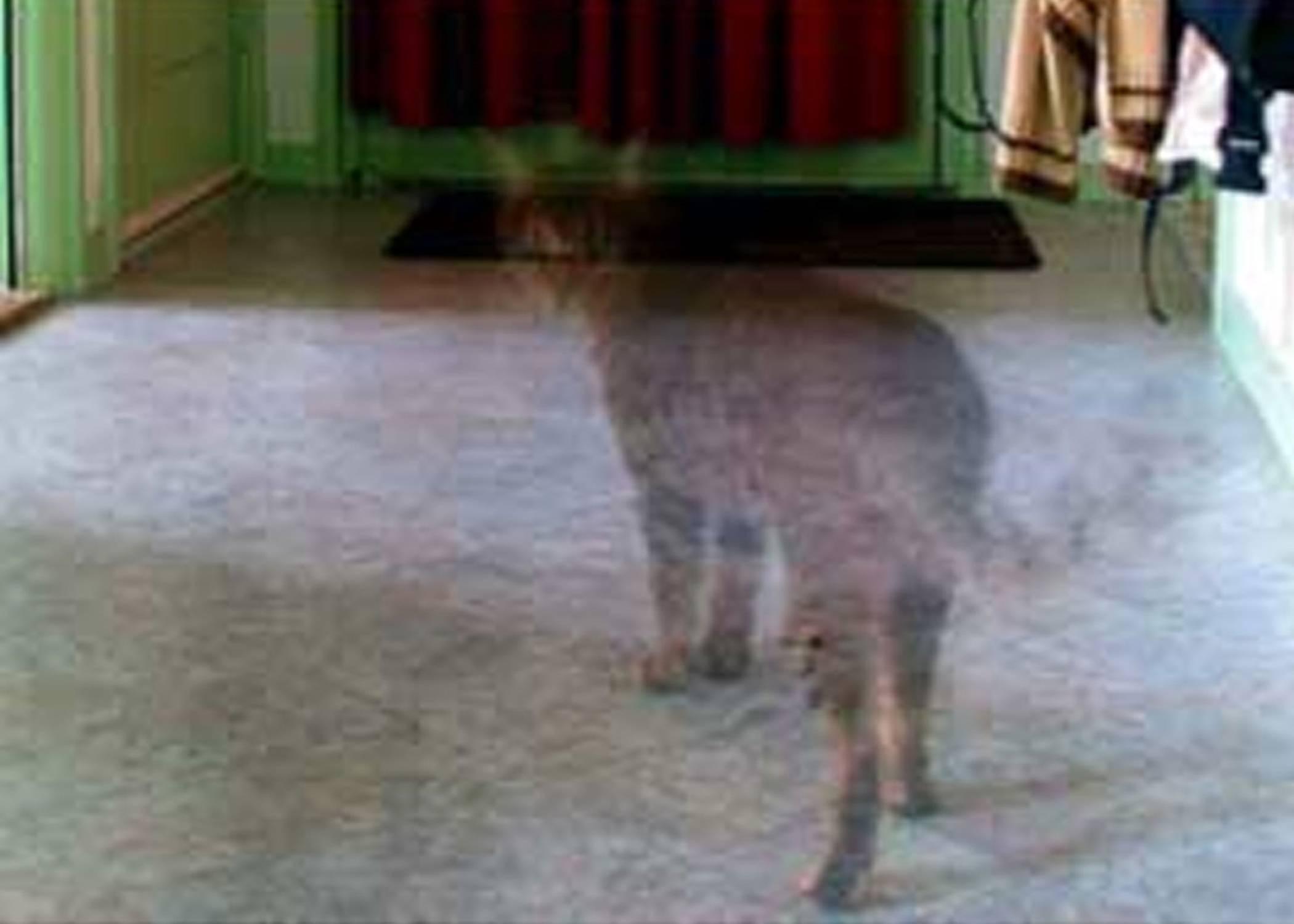 Правда что кошки видят призраков. видят ли коты призраков? почему думают, что коты видят призраков