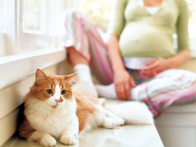 Токсоплазмоз при беременности и кошках - чем опасно для женщины, симптомы, лечение и профилактика! | caticat.ru