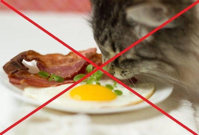 Можно ли кошкам давать яйца?