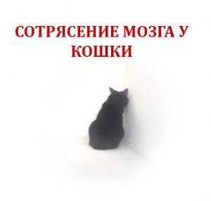 Сотрясение мозга у кошки