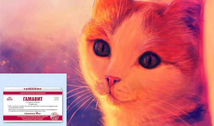 """Эффективный биостимулятор для домашних животных """"гамавит"""""""