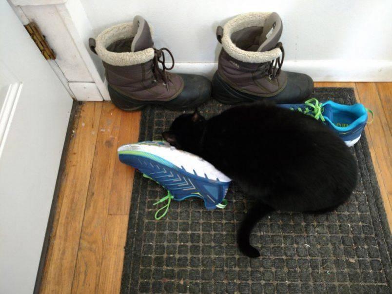 Кошка гуляет: как успокоить и помочь во время течки?