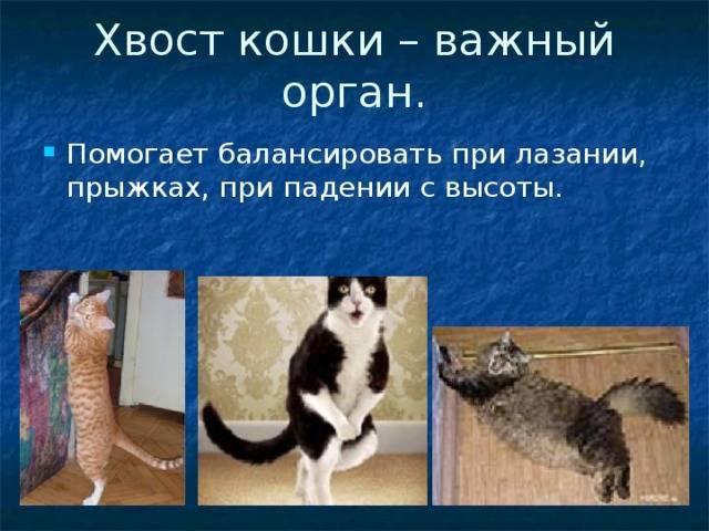 Почему кошка дрожит: основные причины, лечение
